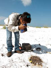Florida Department of Environmental Protection Beach Oil Monitor Joey Whibbs documents a collection of tar balls found along the shore at Fort Pickens during a recent survey.