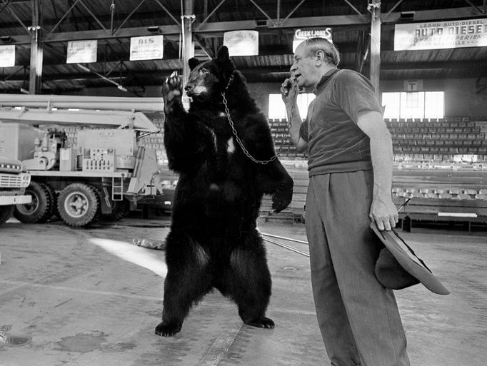 Smokey, a svelte 550-pound Alaskan black bear, is put