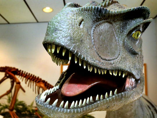 A model of an Allosaurus, a dinosaur from the late Jurassic period, is on display in one of the fossil rooms at Earth Experience, Middle Tennessee Museum of Natural History in Murfreesboro.