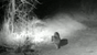 A mountain lion approaches a house in a video clip