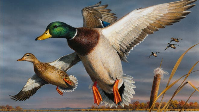 This painting of mallard ducks by Robert Hautman of Delano, Minn. won the 2017 Federal Duck Stamp Contest.