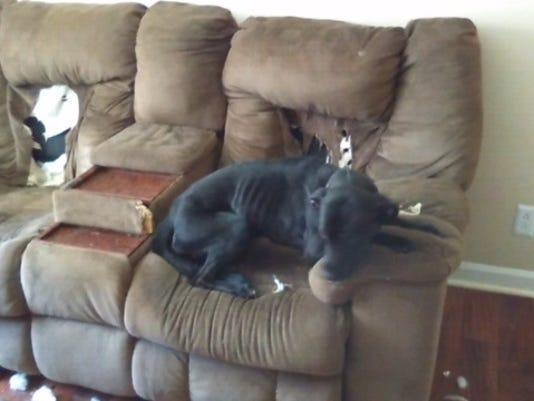 635968628108819776-abandoned-dog.jpg