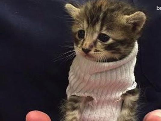 636119637301995136-kitten.jpg