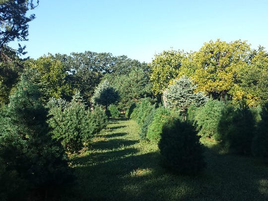 THE Christmas Tree Farm is located at 33459 663rd Ave,