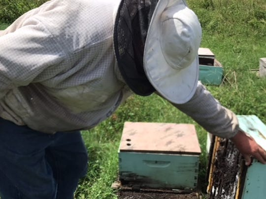 Keith Councell, owner of Councell Farms and a beekeeper,