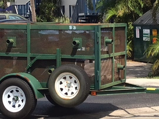 A black bear seen wandering around Fort Myers near Colonial Boulevard and DeLeon Street was captured by state wildlife officers Monday and carted away to be released in the wild.