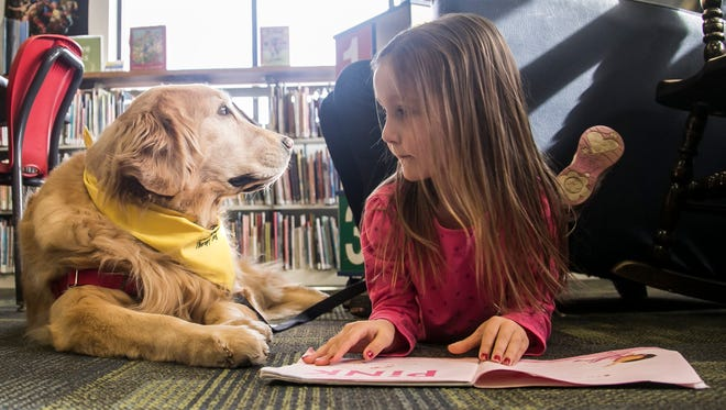 Lindsey Bickford, 5, of Dover Township, makes eye contact with 8-year-old golden retriever Lyra during the Tales for Tails program Saturday, Feb. 11, 2017, at the Dover Area Public Library. The Tales for Tails program is for elementary school age children who are reading independently and wish to practice reading aloud to a furry friend. The program is available the second Saturday of each month from 10 a.m. to noon, and sessions can be scheduled in advance by calling the library at 717-292-6814. Amanda J. Cain photo