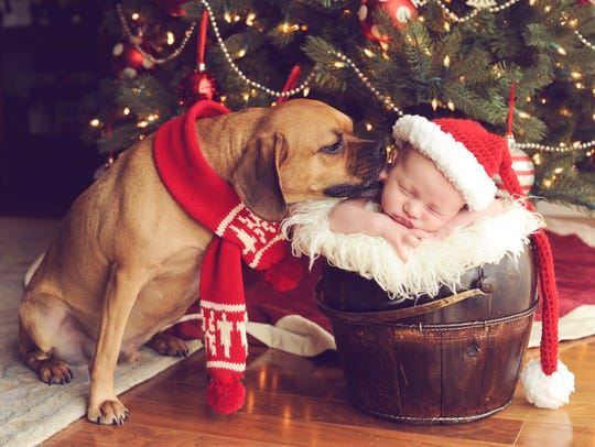 Family photo Christmas cards are a favorite for many. And what could be more adorable than newborns and pets?