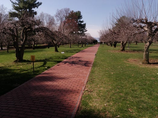 Boscobel's Frances Stevens Reese Woodland Trail of Discovery