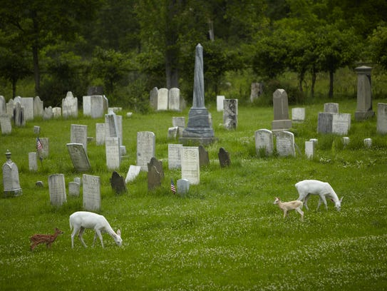 The white deer, not albinos, have bred and multiplied