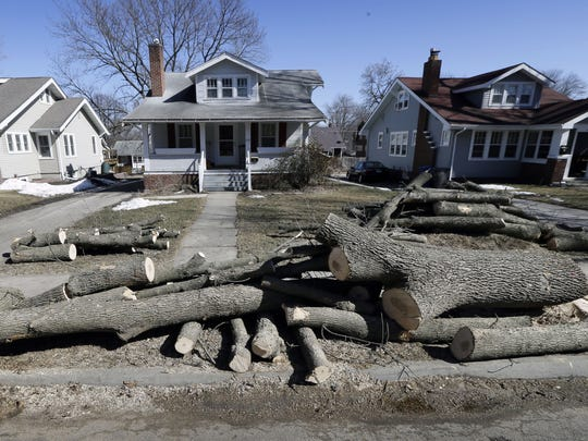 Logs from a recently cut down ash tree sit in front of home on March 9 in Des Moines, Iowa. Daunted by the cost and difficulty of stopping the emerald ash borer, many cities are choosing to destroy their trees before the insect can. Chain saws are roaring in towns where up to 40 percent of the trees are ashes, and rows of stumps line streets once covered by a canopy of leaves.