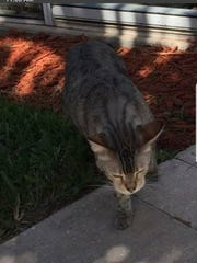 DO YOU KNOW ME? I was found in River Reach apartments off Airport-Pulling Road.