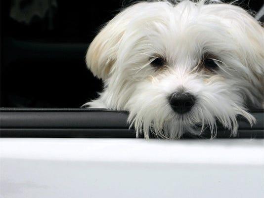 waiting-dog.jpg