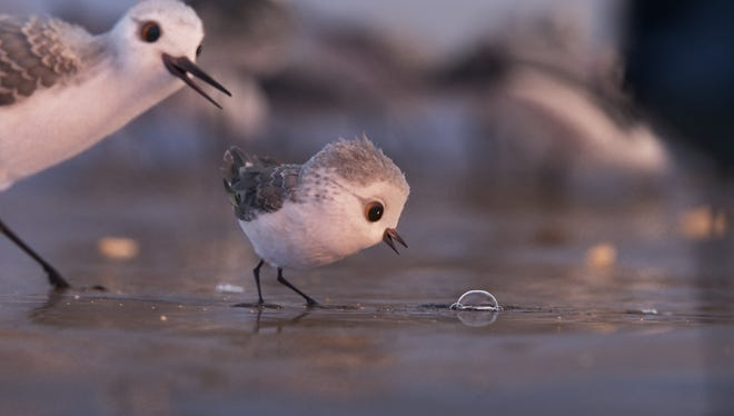 """""""Piper"""" (United States, 6 minutes), directed by Alan Barillaro, tells the story of a sandpiper hatchling who leaves her nest to hunt for food for the first time."""