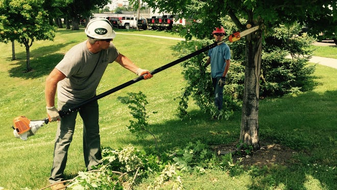 Al Hansen and Evan Sakry, with Sioux Falls Parks and Recreation's forestry division, trim a maple tree at Dugan Park Monday. The city began aggressively diversifying its tree population in 2008, in part to minimize the impact an emerald ash bore infestation would have on the city.