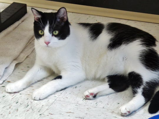Jasper is a 3-year-old black and white fellow who was