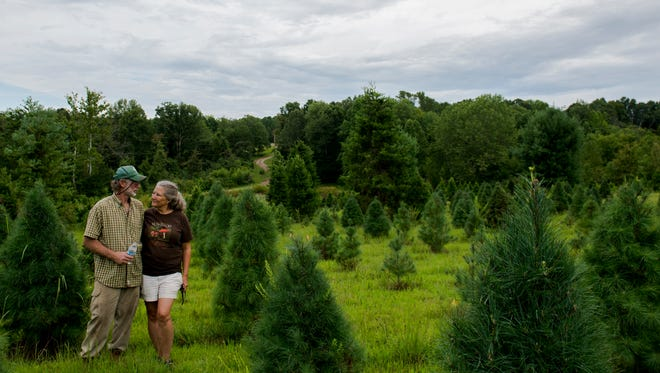 Erin's Farm owners Gary and Linda Hamm pose for a portrait among their growing Christmas trees Aug. 17, 2017.