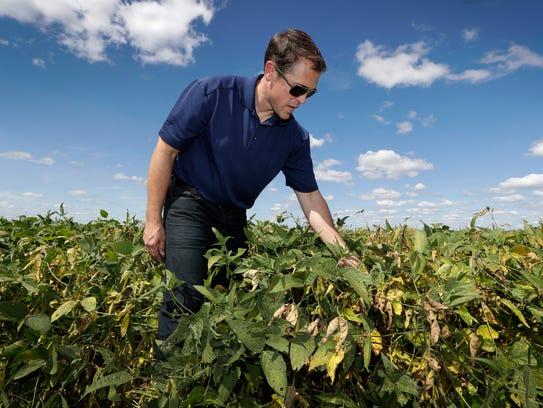 Grant Kimberley checks soybean plants on his farm Sept.