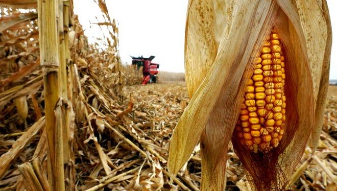 A cornfield near Balltown, Iowa, Oct. 21, 2015.