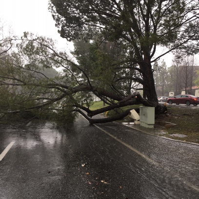 A large tree on Hampshire Road near Wild Rose Street