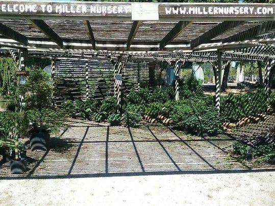 des.urb0829 biz miller nursery
