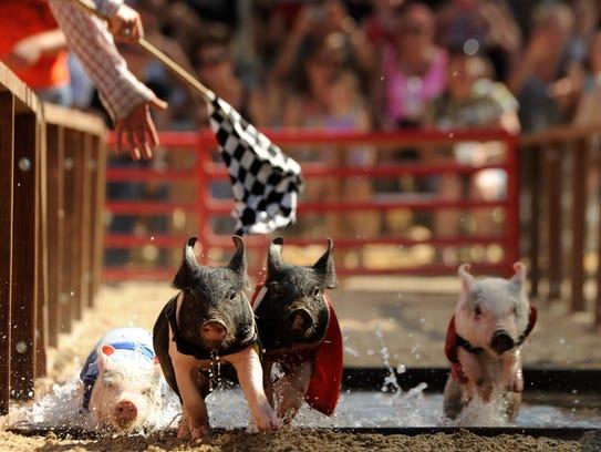 Hog Hogan (from left) Kobe Bacon, Shaquel o Squeal