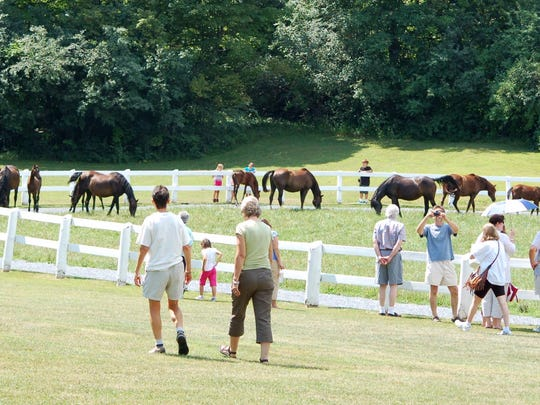 Visitors at the 2012 Vermont Day enjoying the broodmares and foals.