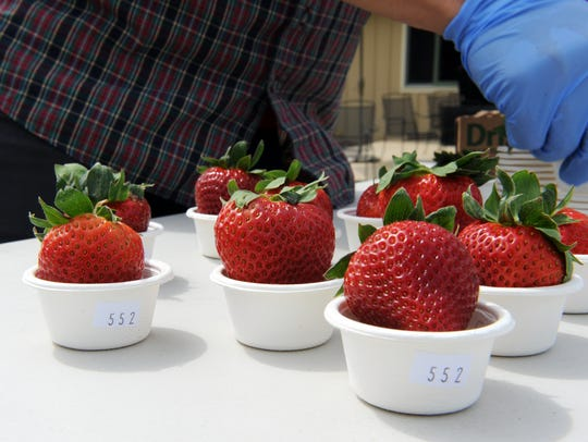 Sensory analyst Henry Young prepares berries for a