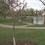 Michael Brown memorial tree is replaced
