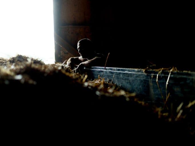 David Hamlin takes a break from loading hay into a