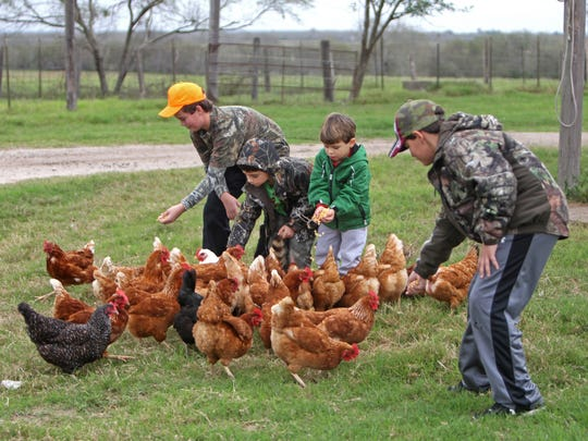 Kids seem to be fascinated with chickens. Just give them a bucket of corn.