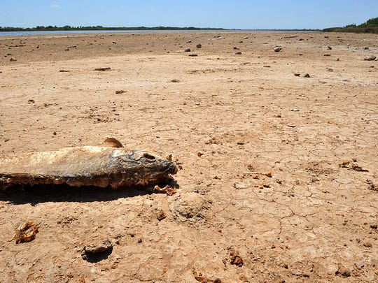 "An occasional dead fish marks a walk along the ""banks"" of Lake Wichita in this July 2012 photo. Extreme drought conditions have moved the water's edge about 75 yards further out than normal. The extended forecast is for continued triple-digit heat and no chances of precipitation."