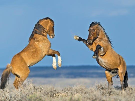 MAIN Wild_horse_12.jpg
