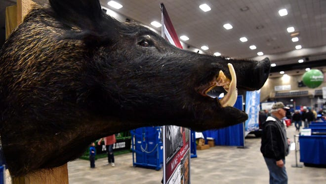 A wild hog mount hangs beside the Lone Star Hog Trappers booth Tuesday at the Texas Farm-Ranch-Wildlife Expo at the Taylor County Coliseum. The show continues Wednesday.