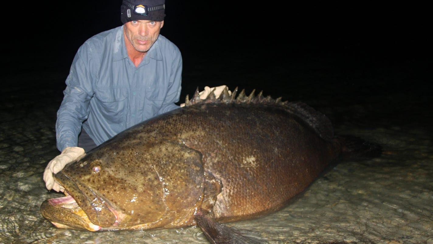 Will florida allow goliath grouper fishing for Goliath grouper fish
