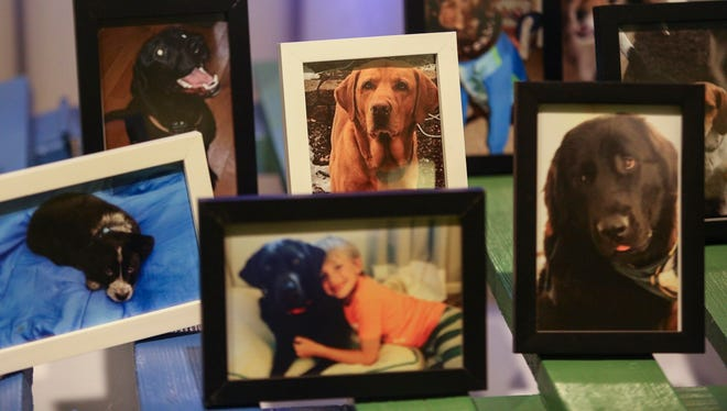 Photos of dogs are displayed as pet owners attend a community memorial service for the 30 dogs that were killed at Storm's Ahead Kennel.