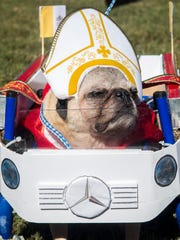 Pope Pug the 2nd, also known as Whiskey, shows off his costume, which won Best in Show, at the Howl-O-Ween Pooch Parade at UT Gardens in Knoxville on Oct. 23, 2016.