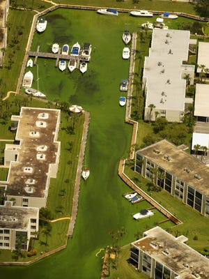 Algae blooming in the St. Lucie River makes it difficult to tell water from grass in this photo, taken from the air near Stuart in 2005.