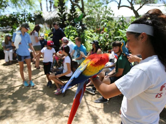 The South Texas Botanical Gardens & Nature Center features Parrot Talk at 1:30 p.m. Fridays, Saturdays and Sundays.