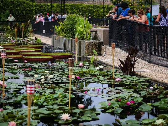 Visitors walk around the water lily pools during the