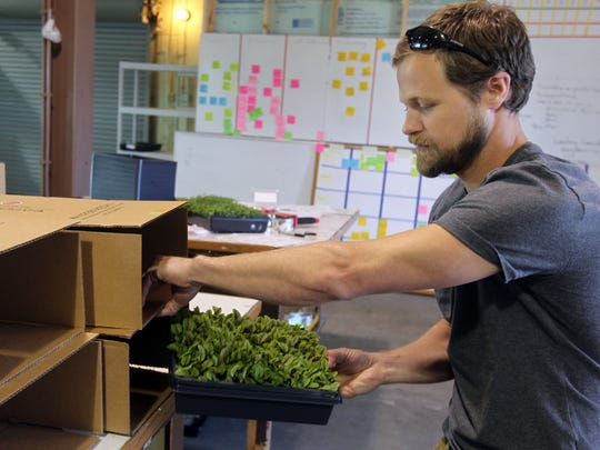 Sam Dunlap, director of operations at Waterfields, a hydroponic microgreens business, packages red vein sorrel for shipping. The company has expanded its operation into a 3,500-square-foot space in the West End. The company was founded in Lower Price Hill in 2013.