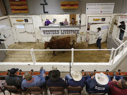 Cattlemen buy and sell livestock at the Western Livestock Auction near Great Falls, Montana. Just four multi-national corporations control 80-percent of all the beef raised in the United States.: TRIBUNE FILE PHOTO