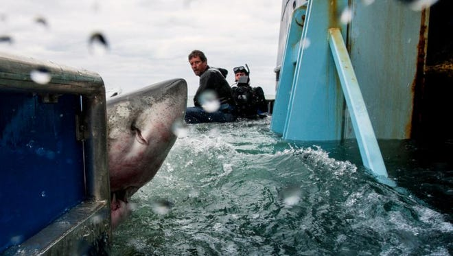 FILE IMAGE: Lydia the Shark. The great white shark had its OCResearch tracker ping off the waters of Delmarva no May 14, 2016.