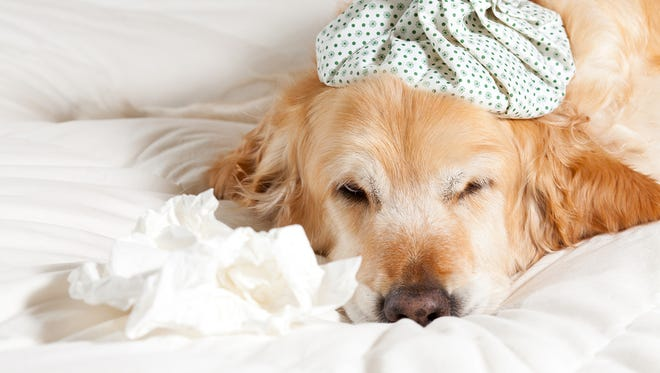 Veterinarians are working to educate pet parents about the recent outbreak of canine influenza in Georgia and Florida.
