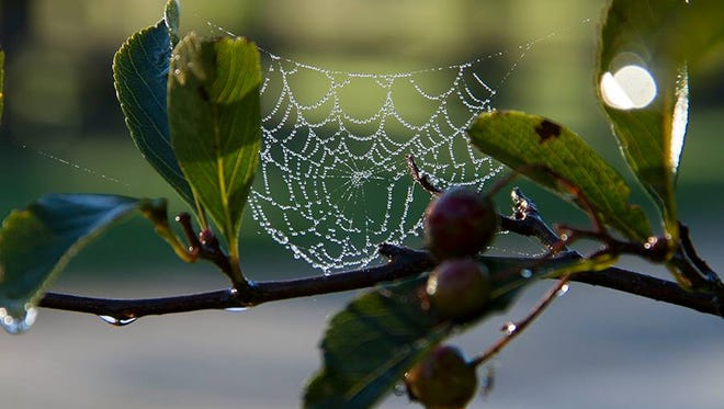 Spider web at Woodland Dunes Nature Center and Preserve in Two Rivers.