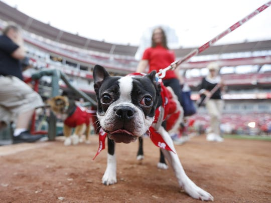 A Bark in the Park event at Great American Ball Park last year.