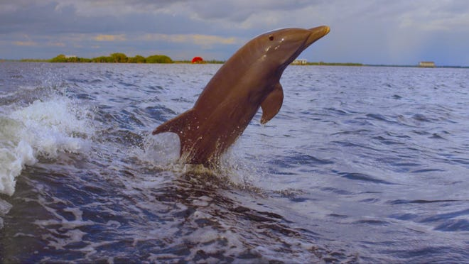 Dolphins jumping out of the water? You better believe that's something to be thankful for.
