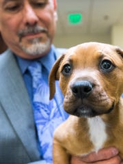 Rodrigo Silva, who oversees Maricopa County Animal Care and Control, holds a puppy at the county's Phoenix shelter.