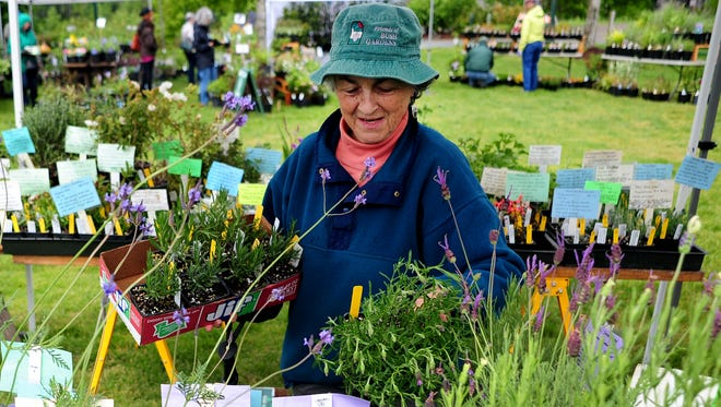 Gretchen Carnaby of the Friends of Bush Gardens browses items at a previous year's plant sale.
