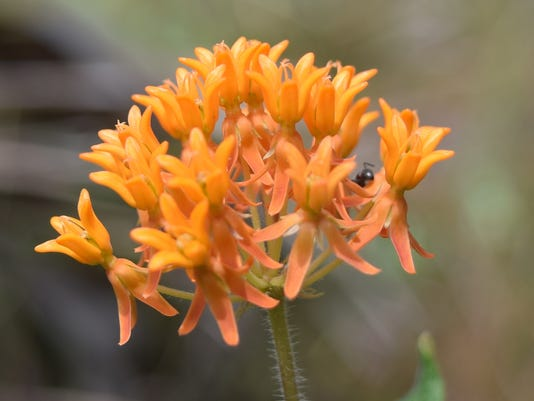 636578402598516407-Tuberosa-Carole-McKay-Photo-by-Gail-Fishman.jpg